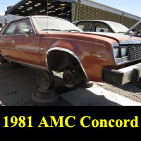 Junkyard 1981 AMC Concord