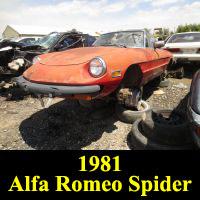 Junkyard 1981 Alfa Romeo Spider